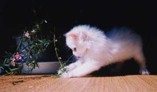 cat-min8.jpg
