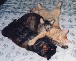 cat-remtora11.jpg