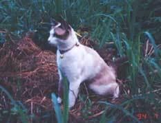 cat-shan13.jpg
