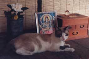 cat-shan20.jpg